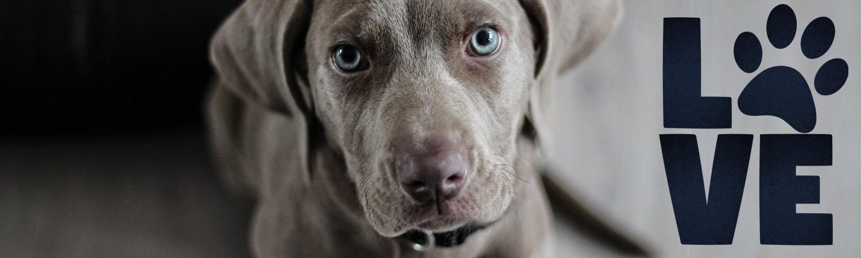 Allergie Hund Katze Haustier Hilfe Aloe Vera Gel