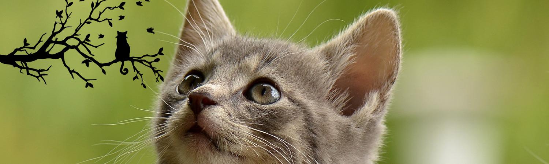 Blasenentzündung Erkrankung Bakterien Nieren Harnblase Haustier Katze Aloe Vera