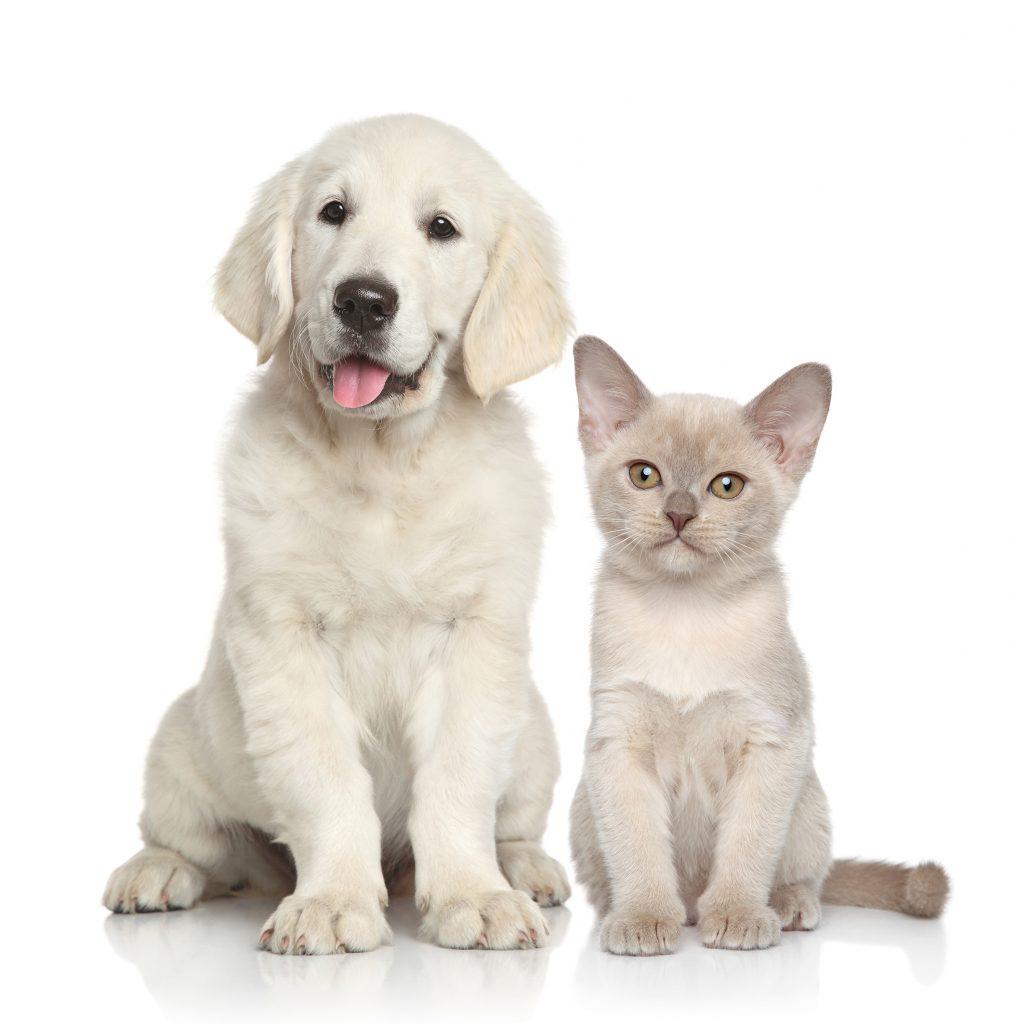 ifibr Regeneration Hund Katze Vitalität Gesundheit