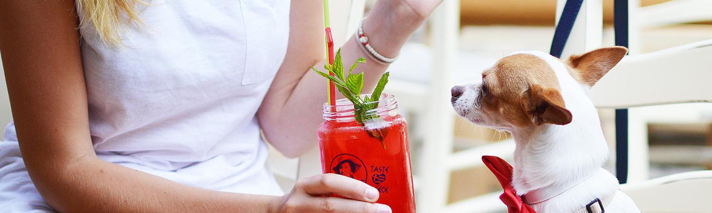 Tiergesundheitscoach gesunde Haustiere Schulung