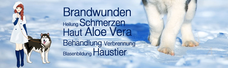 Brandwunden Heilung Schmerzen Haut Aloe Vera Behandlung Verbrennung Blasenbildung Haustier